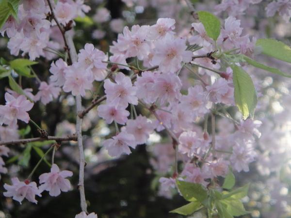 拉近拍~ 花朵好小好可愛喲~