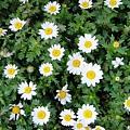 花瓣白的發亮呢~