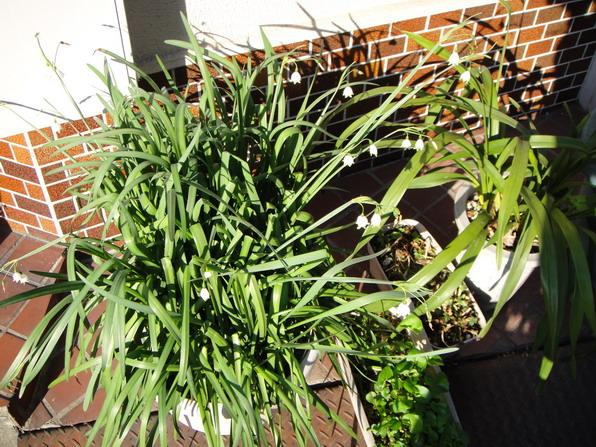 看似雜草,結果花朵長的超可愛的啦!!
