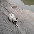 西塘的狗狗~ 很攸閒的在睡覺~