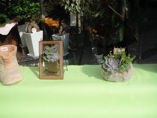 途中遇到的花店,櫥窗也有多肉植物的組合盆栽~