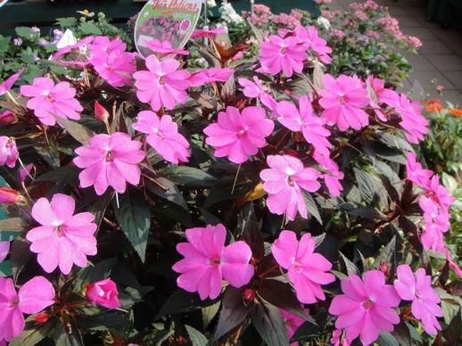 開滿花還挺美的~