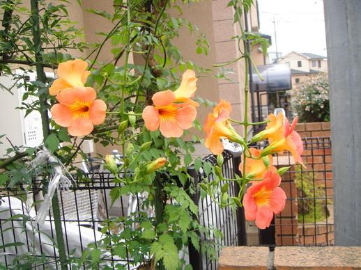 Hiro爸種的花~