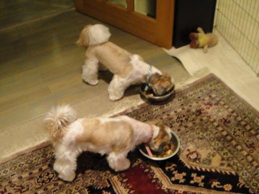先把牠們餵飽我們再出門吃晚餐