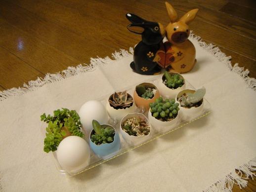 雞蛋多肉盆栽