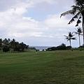 處處都是椰子樹