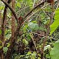 司機帶我們去看一處海邊時,見到叢林有一對藍色的鳥,它們的羽毛藍的好美喔~