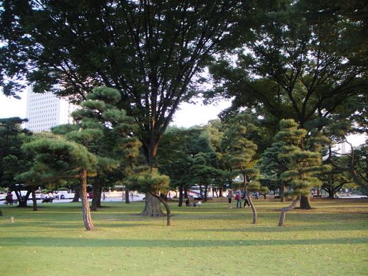 四株松樹~
