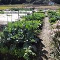 這條滿滿種著野菜的就是Hiro爸的菜園