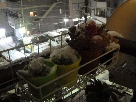 積雪的肉肉~