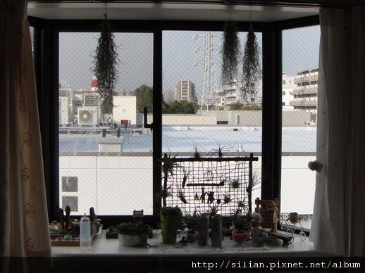 2010 冬 幸福窗台