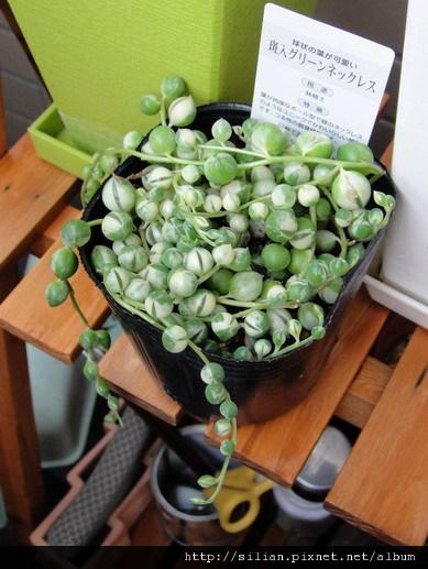 2011/5/24 綠之鈴錦購於Homes