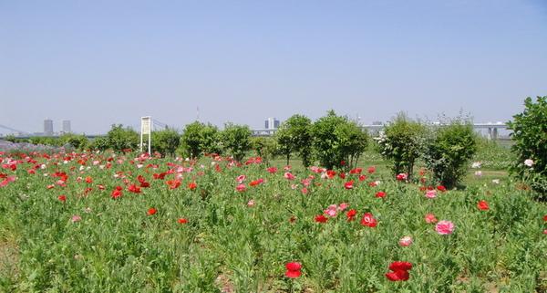 藍藍的天空~ 紅紅的花朵~~