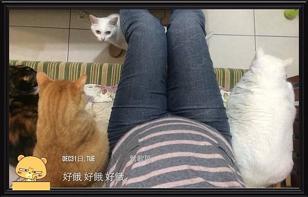 2013-12-31 等不到晚餐與四貓一起跨年
