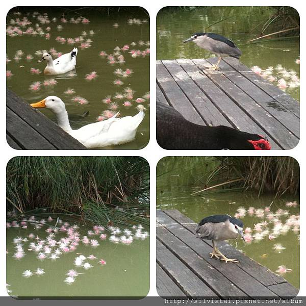duck_1857.jpg