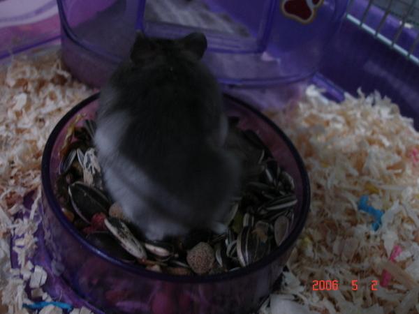 小小胖找東西吃