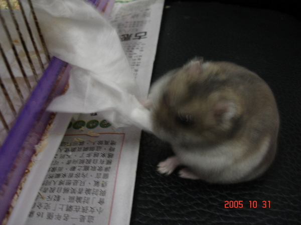 狂拉衛生紙的胖