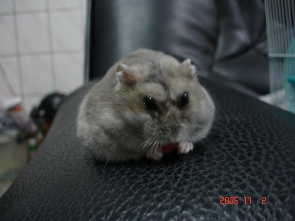 沙發中發呆的胖