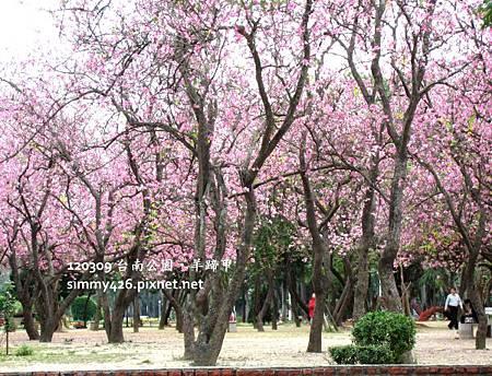 120309 台南公園 羊蹄甲(1)