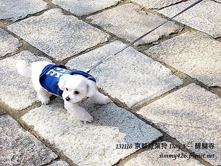 可愛的小白狗
