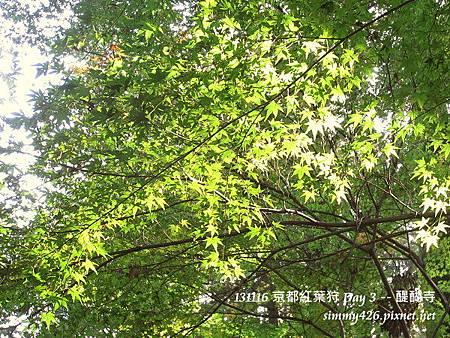 醍醐寺(26)