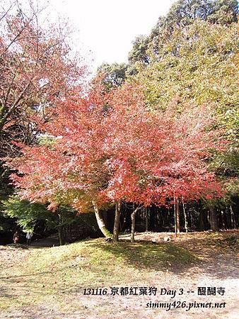 醍醐寺(31)
