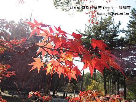 醍醐寺(34)