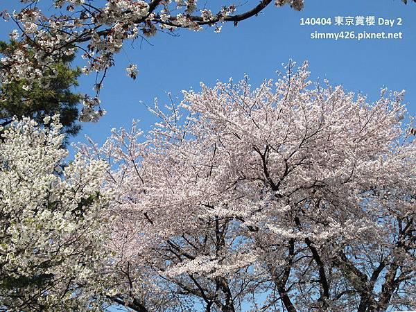 皇居 週邊步道(3).jpg