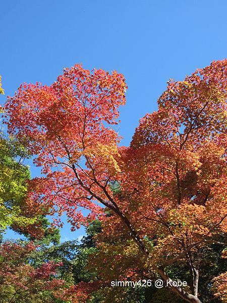 瑞寶寺町公園(6).jpg