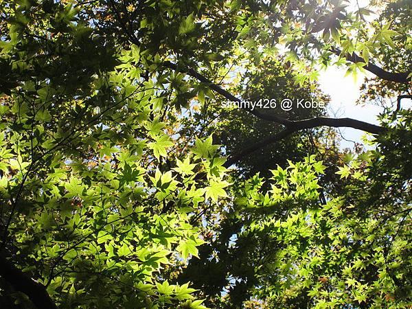 瑞寶寺町公園(8).jpg