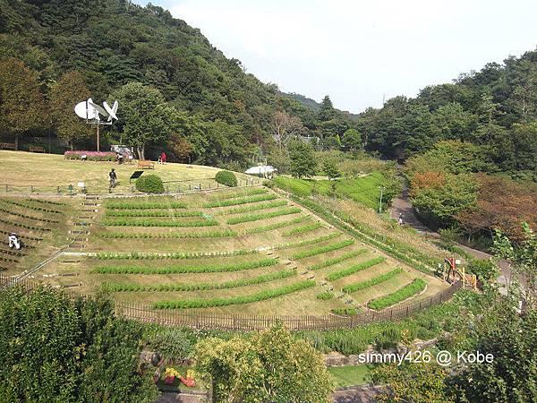 Herb Gardens (12).jpg