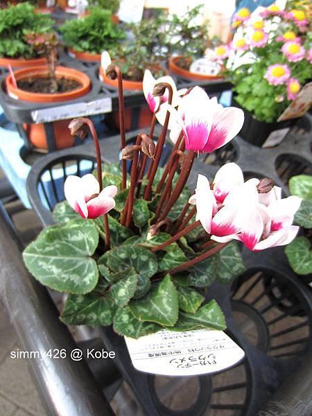 Herb Gardens (21).jpg