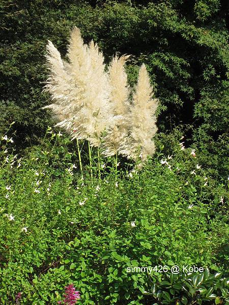 Herb Gardens (33).jpg