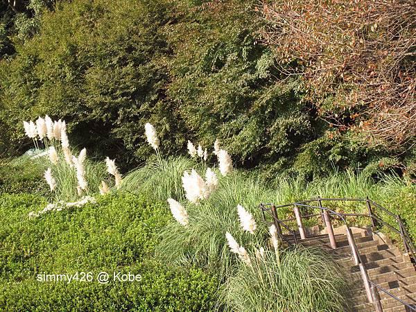 Herb Gardens (38).jpg