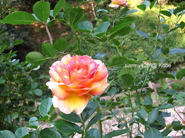 Herb Gardens (77).jpg