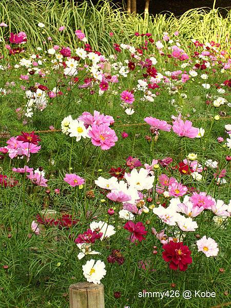 Herb Gardens (79).jpg
