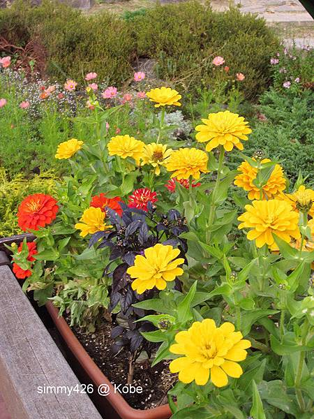 Herb Gardens (80).jpg