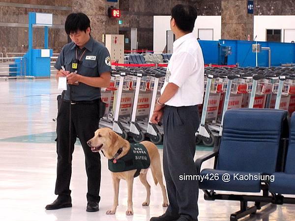高雄小港機場的拉不拉多緝毒犬.jpg