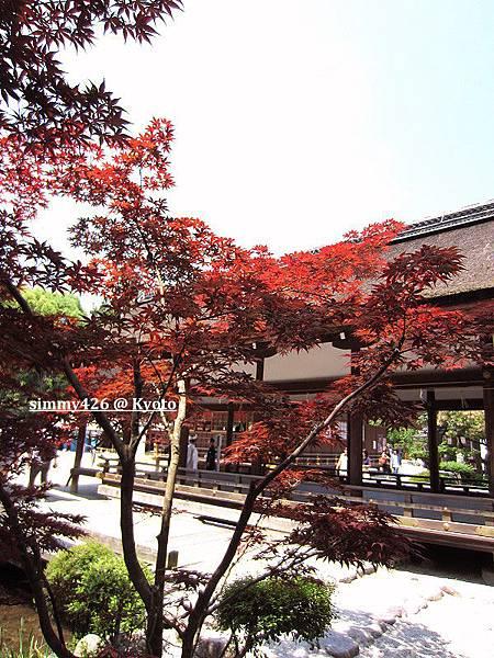 上賀茂神社(10).jpg