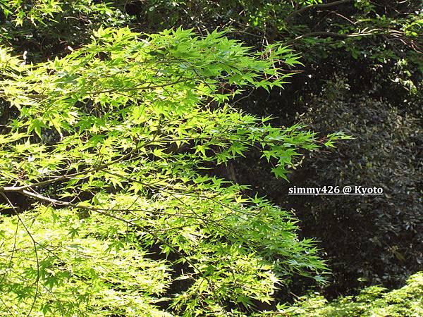下鴨神社(26).jpg