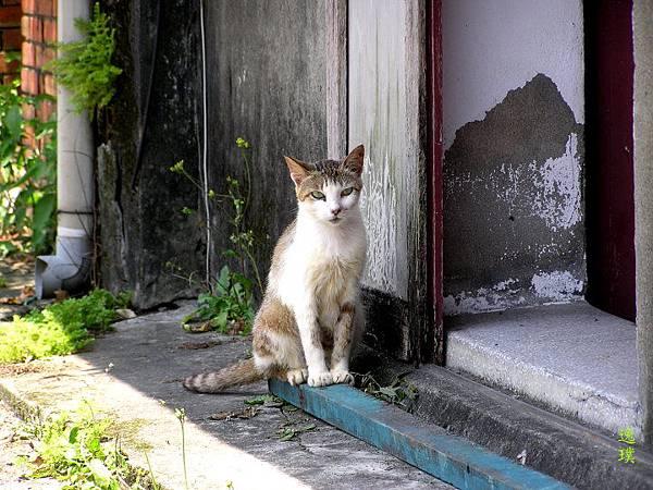 戀念˙貓村