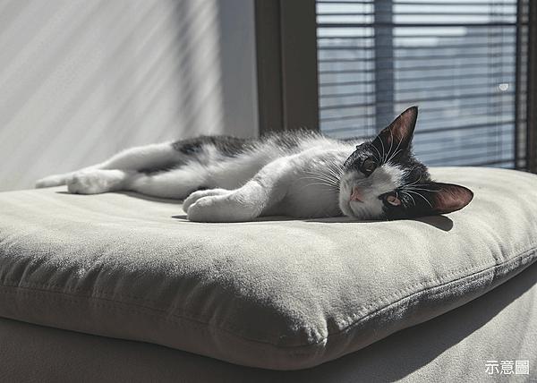 裝潢, 寵物空間,寵物空間設計規劃