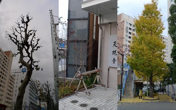 2010 Bday Japan.JPG