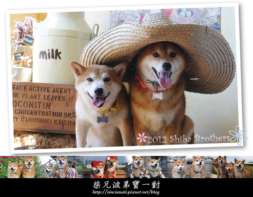 2012 Shiba Brothers正面拷貝.jpg