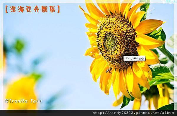 桃園-大園-溪海花卉園區.jpg
