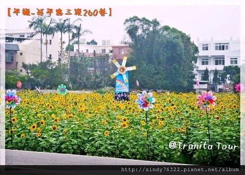 桃園-平鎮-延平路花海.jpg