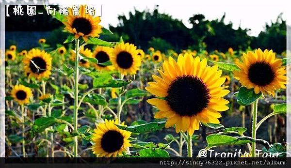 桃園-向陽農場1.jpg