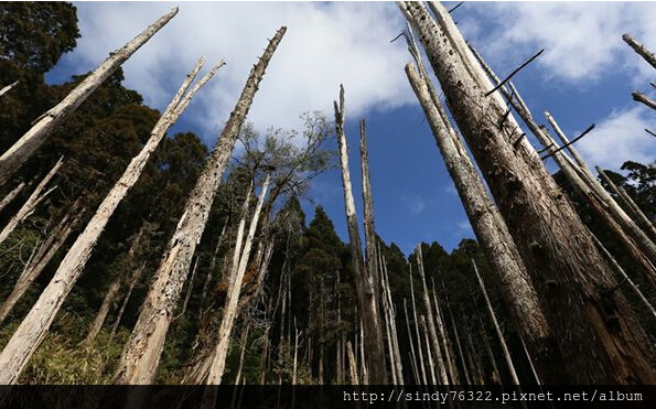 忘憂森林1