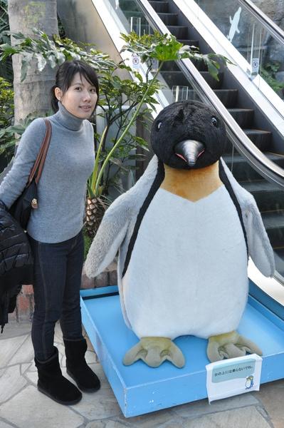 八景島樂園~企鵝