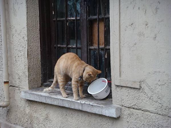 路邊的小野貓